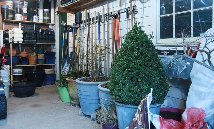 overwintering shrubs in containers