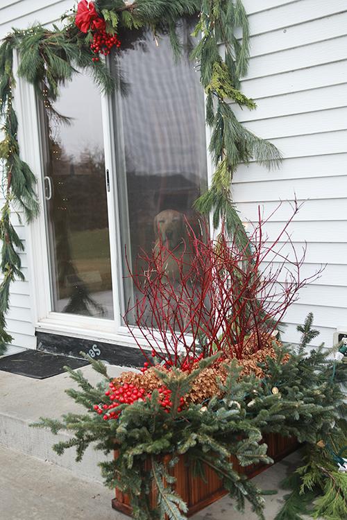Window box as winter planter.