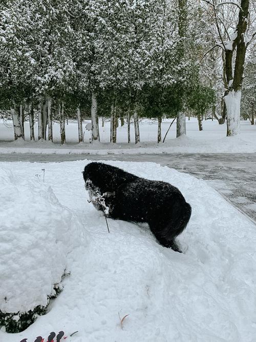 Dorothy in snow