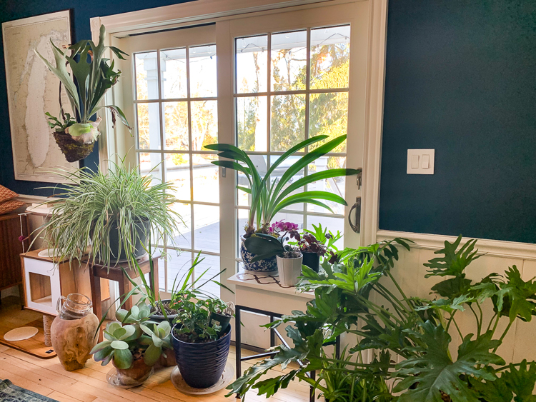 houseplants not faux plants
