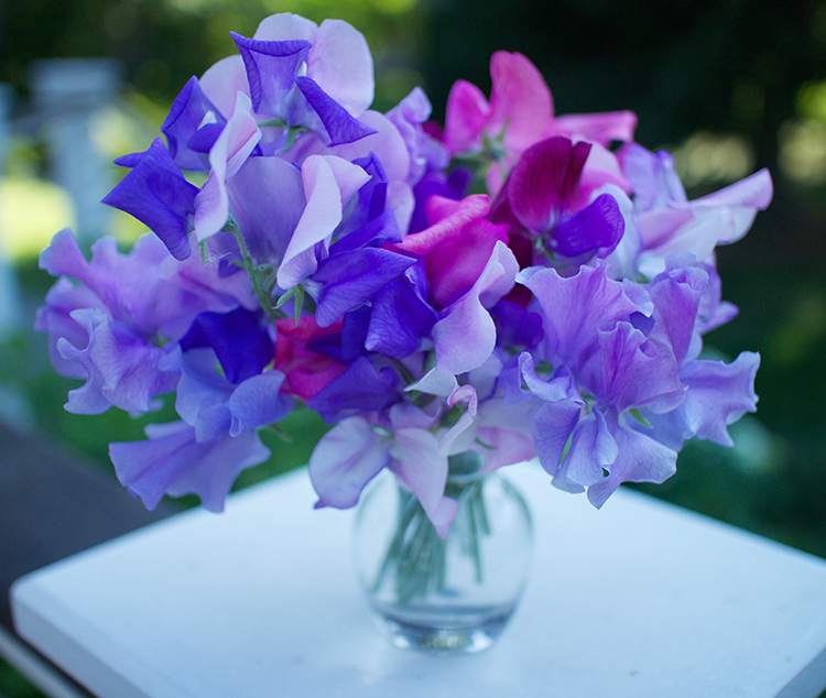'Erehwon' sweet pea bouquet