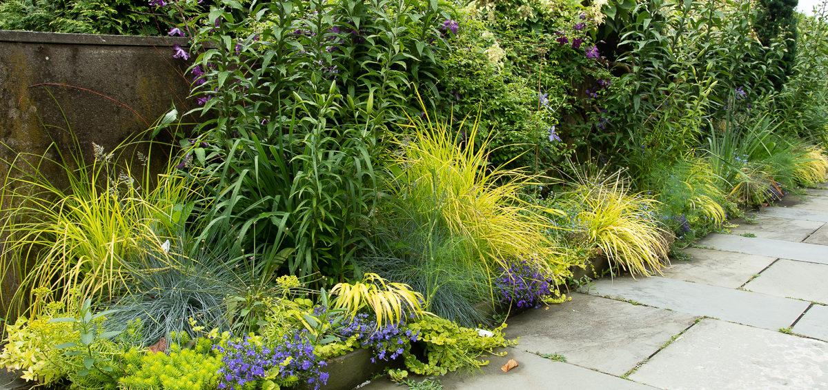 blue yellow border garden
