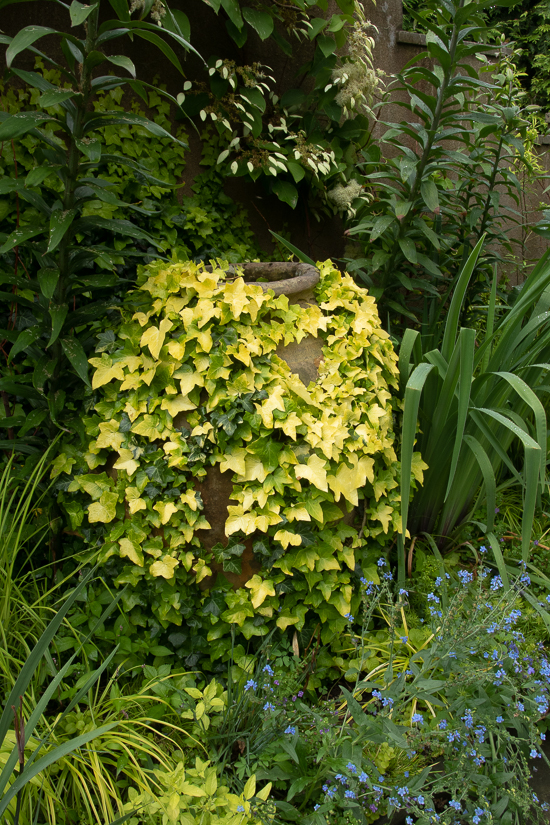 ivy covered pot