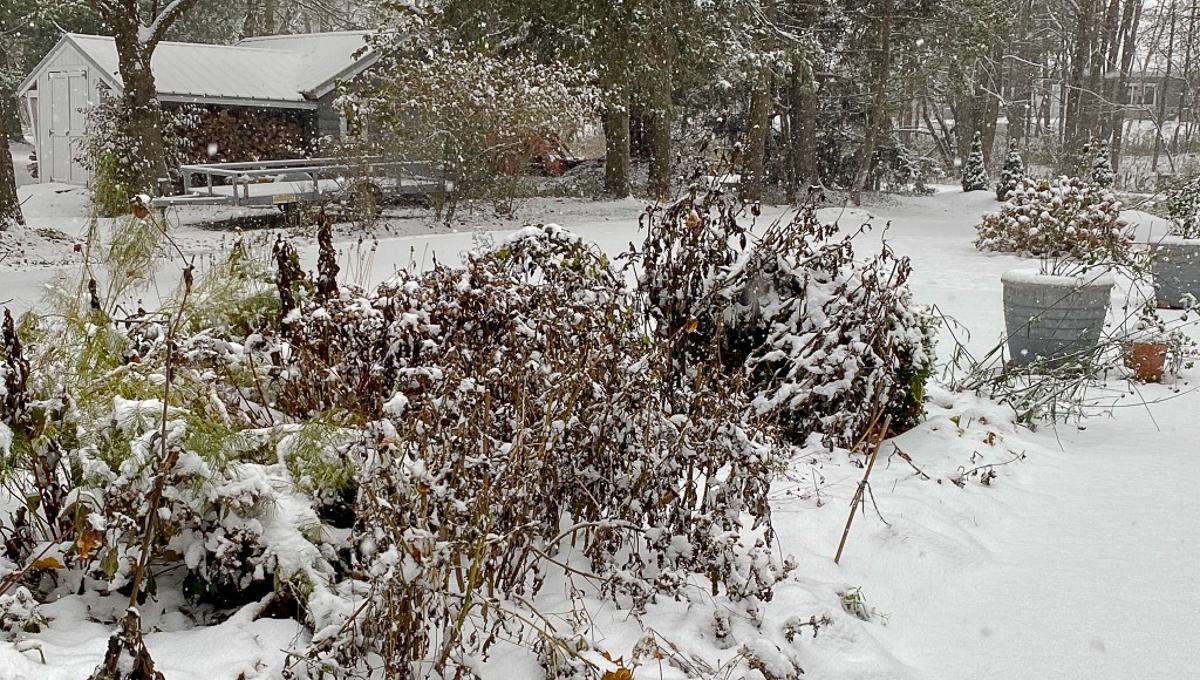 snowy fall garden