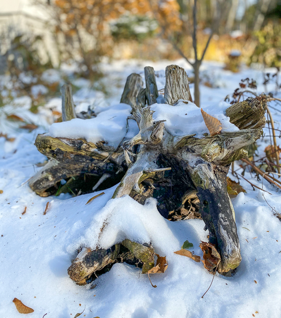 Driftwood covered in snow