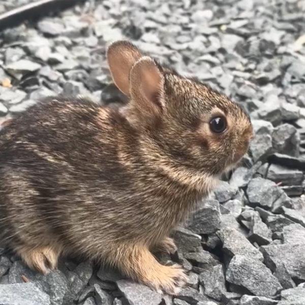 baby bunny rabbit in garden