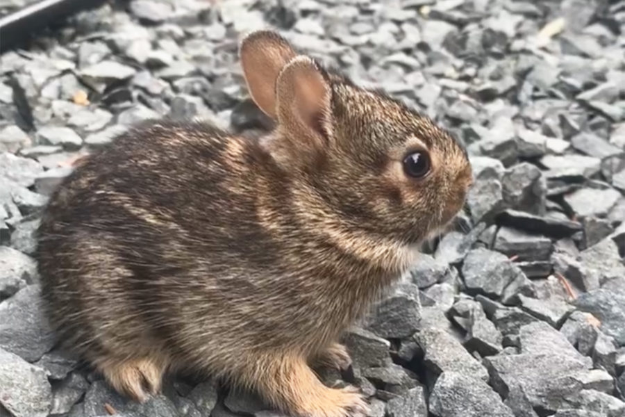 baby bunny rabbit in garden