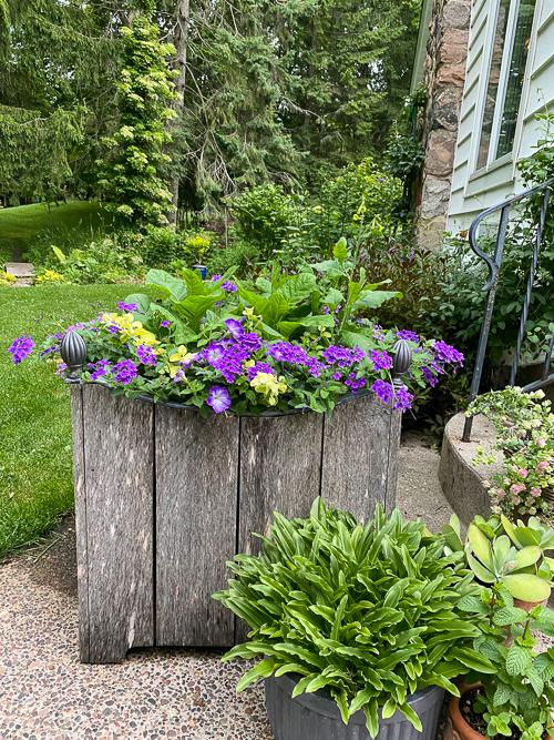 container gardeneing planter