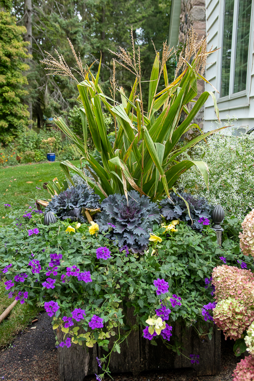 fall planter with kale
