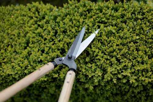 niwaki garden shears
