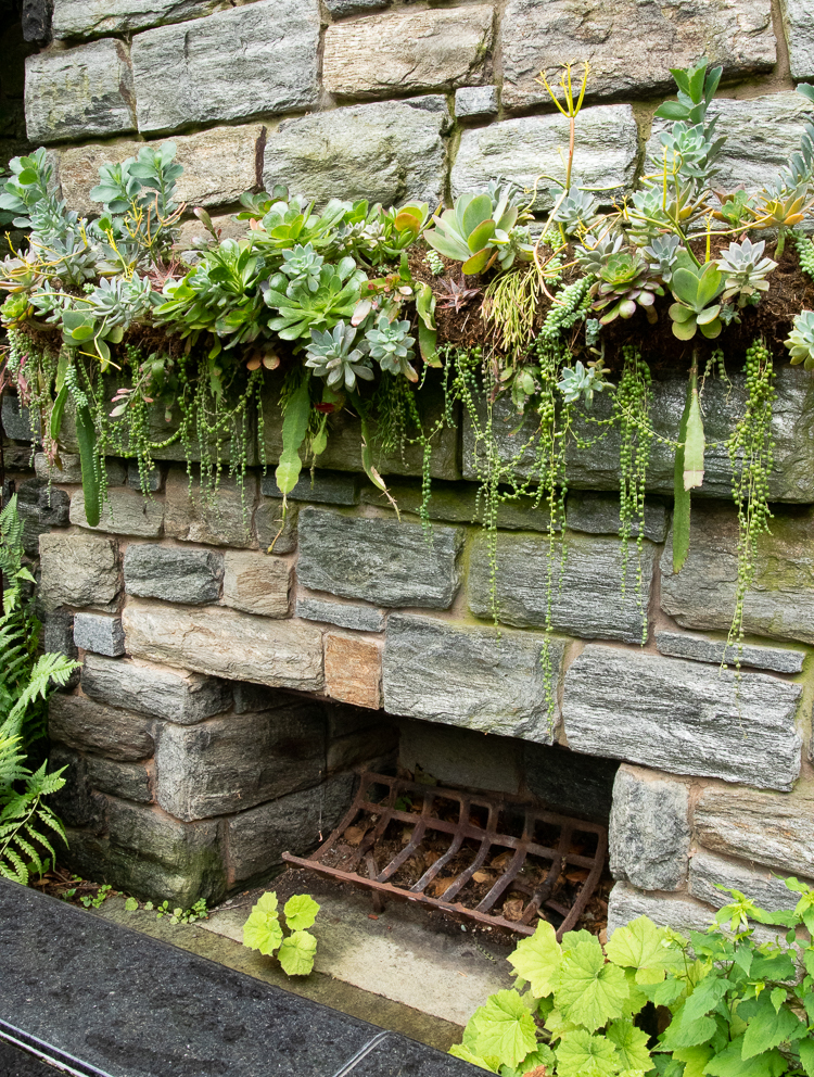 succulent mantel