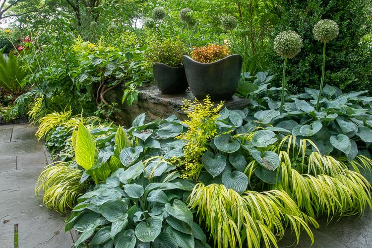 hostas, hakonechloa, planters