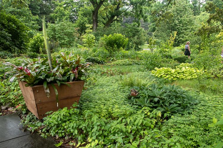 wood planter in garden